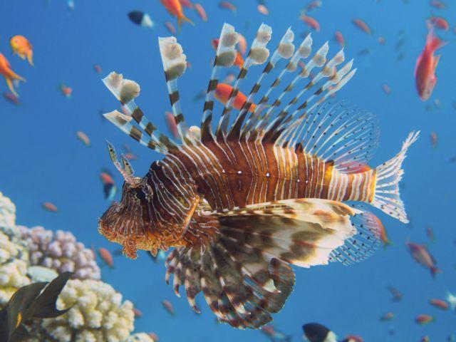 Υπάρχουν περισσότερα ψάρια στη θάλασσα που βγαίνουν