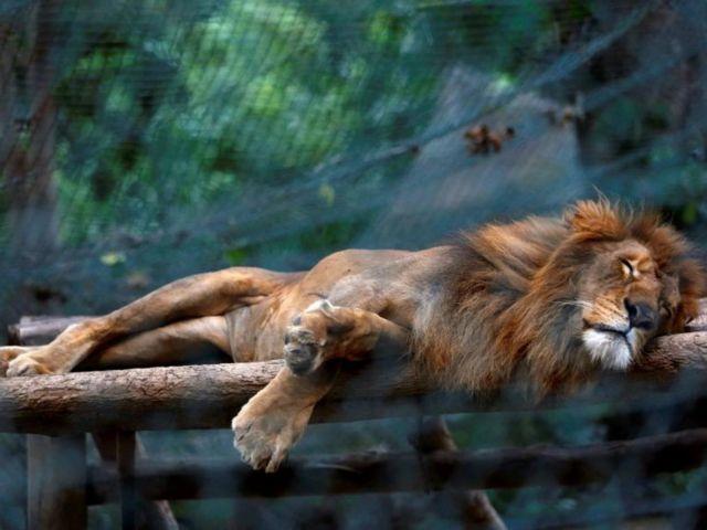 Από την πείνα πεθαίνουν τα ζώα στους ζωολογικούς κήπους της Βενεζουέλας   tovima.gr