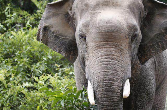 Κίνα: Νεκρός δικυκλιστής από επίθεση άγριων ελεφάντων | tovima.gr