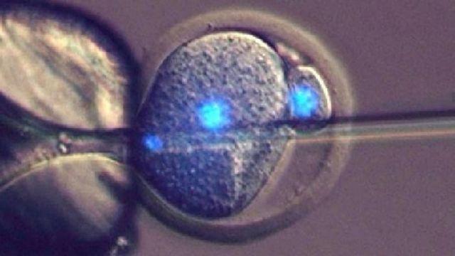 Επιστήμονες μετέτρεψαν αρσενικά ποντίκια σε θηλυκά   tovima.gr
