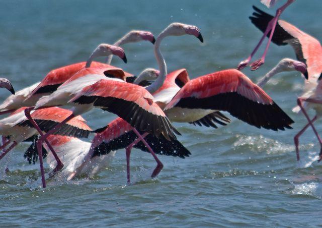 Κέρκυρα: Με ροζ φλαμίνγκο γέμισε η λιμνοθάλασσα της Λευκίμμης | tovima.gr