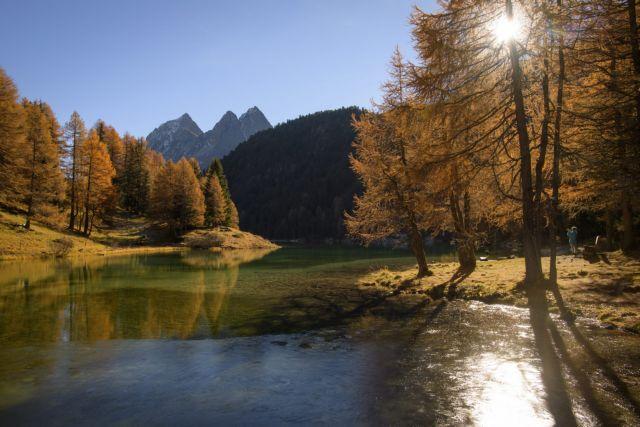 Πώς τα φυλλοβόλα δέντρα γίνονται κίτρινα το φθινόπωρο | tovima.gr