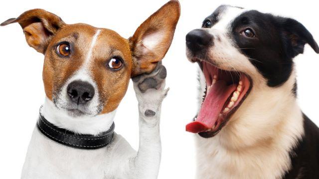 Μιλώντας τη γλώσσα των σκύλων | tovima.gr