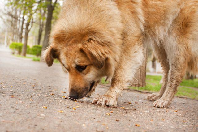 Εισαγγελέας για τις δηλητηριάσεις ζώων στον Υμηττό | tovima.gr