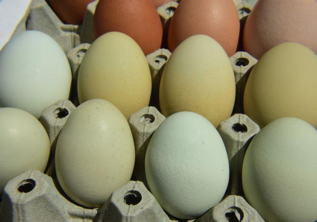 Παρήγγειλαν κατά λάθος 15.000 αβγά στους χειμερινούς Ολυμπιακούς Αγώνες | tovima.gr
