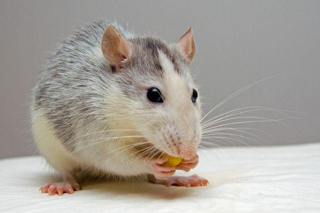 Εγκεφαλικός διακόπτης κάνει τα δειλά ποντίκια αρχηγούς | tovima.gr