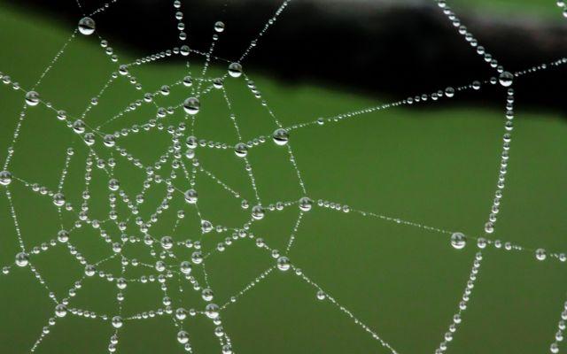 Μετάξι αράχνης «πλέκει» αλεξίσφαιρα γιλέκα | tovima.gr