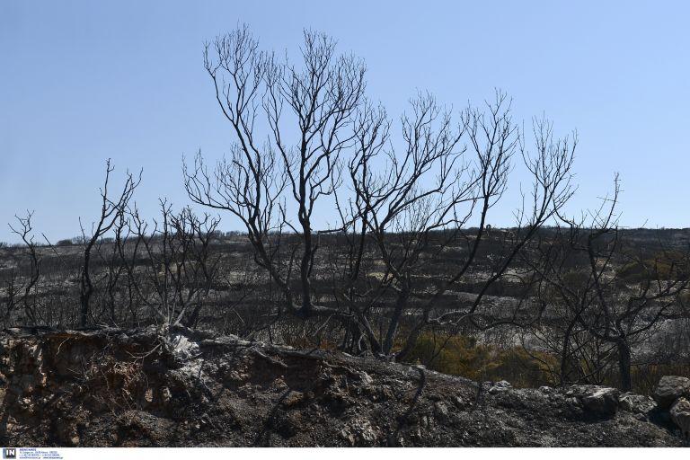 Ο «χάρτης» κι οι αιτίες των καταστροφών από τις δασικές πυρκαγιές το φετινό καλοκαίρι | tovima.gr