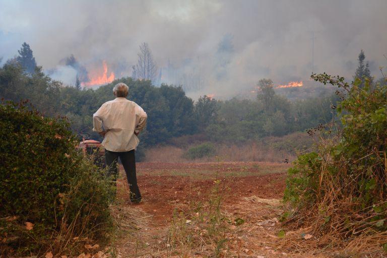 Ζάκυνθος: Αναδάσωση των περιοχών που καταστράφηκαν από τις πυρκαγιές | tovima.gr