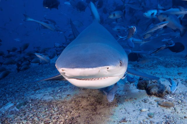 Γιατί δεν υπάρχουν καρχαρίες του γλυκού νερού   tovima.gr