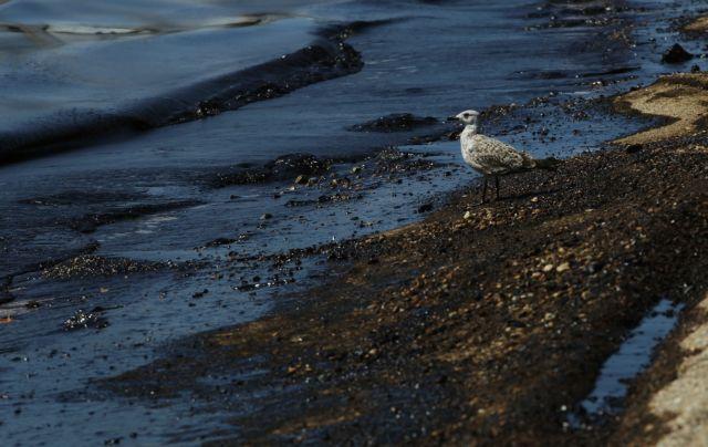 ΚΕΔΕ για θαλάσσια ρύπανση: Να βρεθούν και να τιμωρηθούν οι υπεύθυνοι | tovima.gr