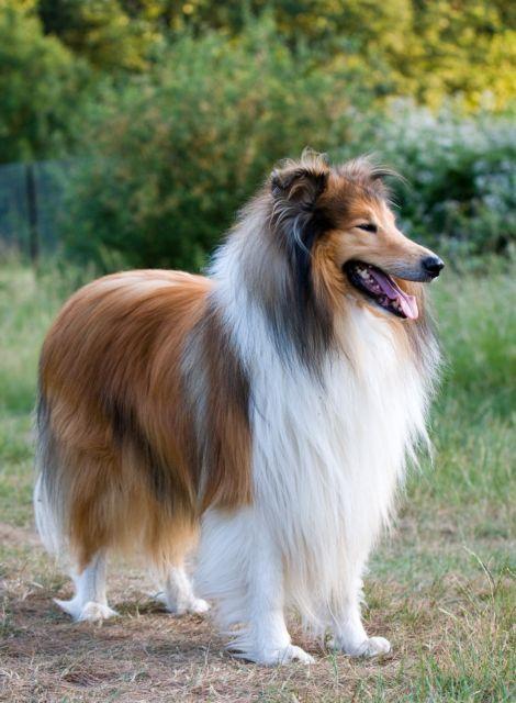 Eνας σκύλος που τον έλεγαν Αϊλίν | tovima.gr