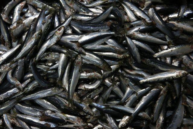 Αποστόλου: Δεν έχουν εντοπιστεί ύποπτα δείγματα ψαριών-αλιευμάτων στην Ιχθυόσκαλα | tovima.gr