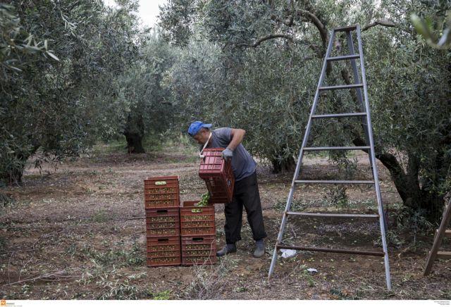 Επιδοτήσεις €2,9 δισ. δόθηκαν στους αγρότες το 2017 | tovima.gr