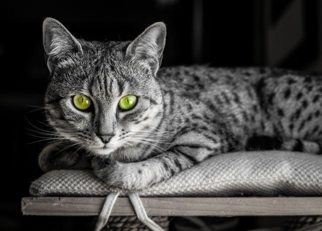 Oι γάτες και η εύθραυστη συμβίωση μαζί τους | tovima.gr