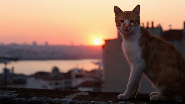 Οι γάτες έχουν τη δική τους ταινία   tovima.gr