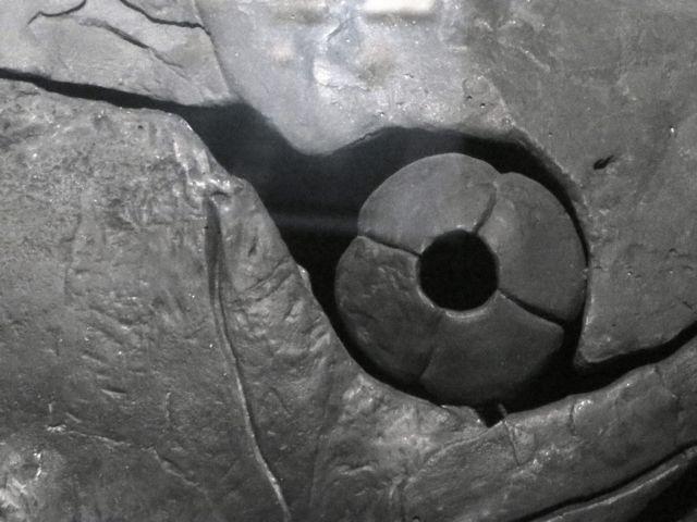 Επιστήμονες ανακάλυψαν το αρχαιότερο μάτι στον κόσμο | tovima.gr