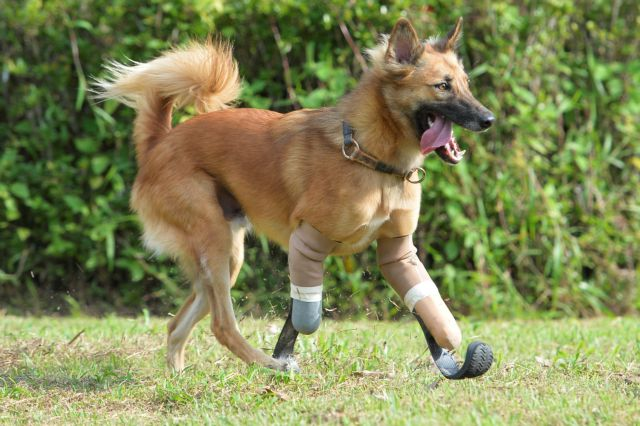 Πόδια παραολυμπιονικών δρομέων σε λυκόσκυλο | tovima.gr