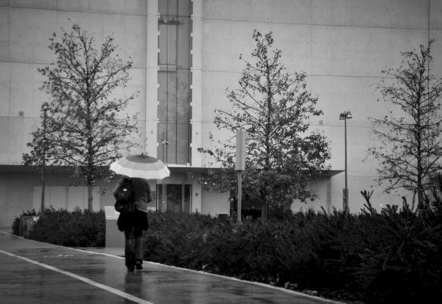 Πτώσεις δέντρων προκάλεσαν οι θυελλώδεις άνεμοι – ο καιρός σήμερα | tovima.gr
