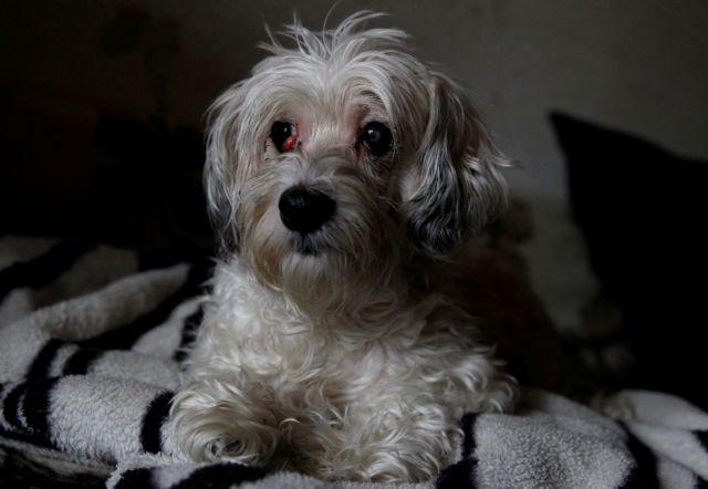 Σκυλίτσα έμεινε δύο βδομάδες δίπλα στη νεκρή ιδιοκτήτρια της | tovima.gr