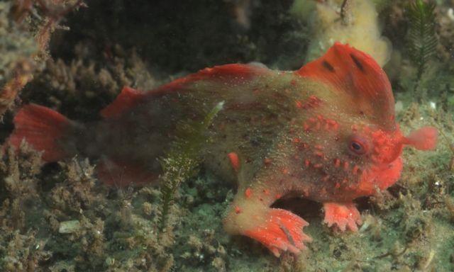 Ανακάλυψαν ένα από τα πιο σπάνια είδη ψαριού! | tovima.gr