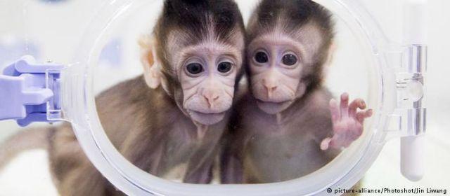 DW: «Πρέπει να υπάρχει ηθική βάση στην κλωνοποίηση» | tovima.gr
