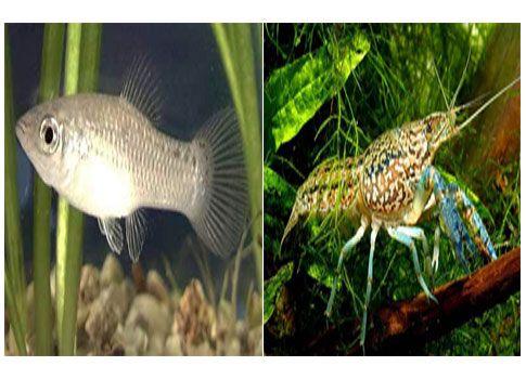 Μια καραβίδα και ένα ψάρι έχουν μόνο θηλυκό φύλο και ανθεκτικό DNA | tovima.gr