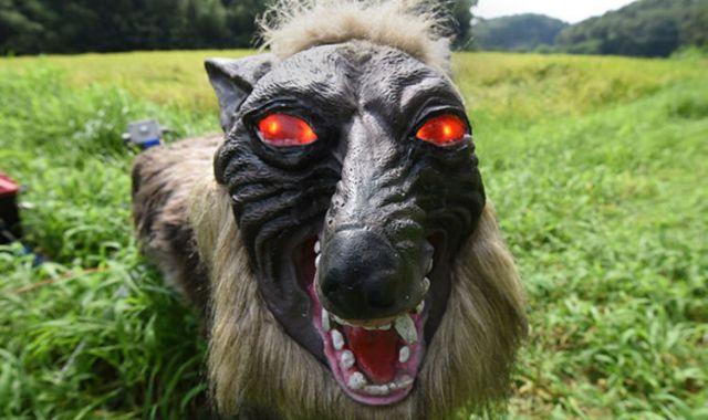 Εφτιαξαν ρομπότ – λύκους για να φοβίζουν τα ζώα | tovima.gr
