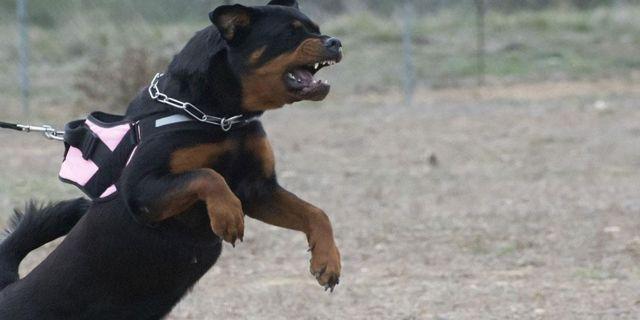 Αποζημίωση 160.000 ευρώ για τον θάνατο 5χρονου από δύο σκυλιά | tovima.gr