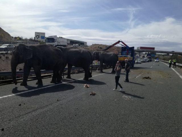 Ισπανία: Ελέφαντες σε αυτοκινητόδρομο μετά από τροχαίο | tovima.gr