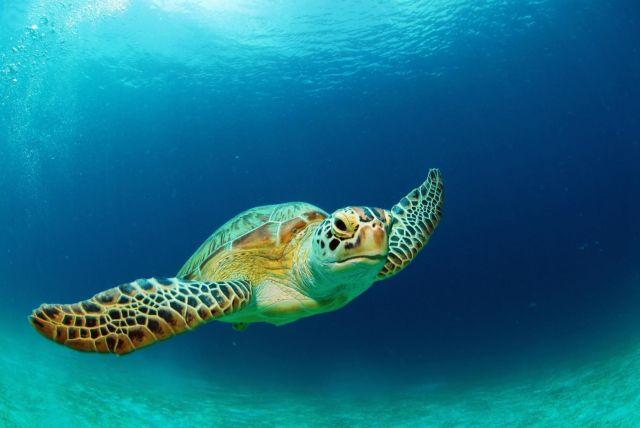 Τα μυστικά της θαλάσσιας χελώνας | tovima.gr