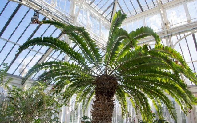 Το πιο μοναχικό φυτό στον πλανήτη | tovima.gr