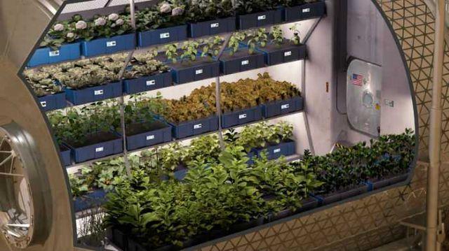 Η καλλιέργεια τροφίμων του Διαστήματος | tovima.gr