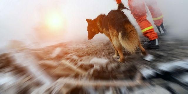 Δημιουργήθηκε «ηλεκτρονικός σκύλος διάσωσης» με οσφρητική ικανότητα | tovima.gr