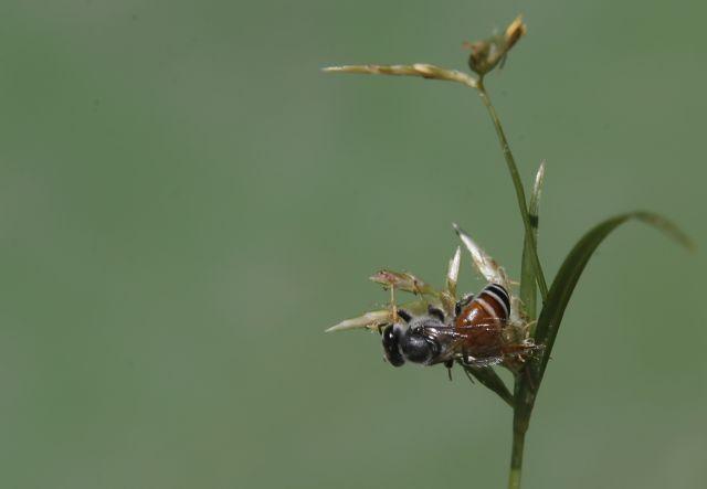Οι μέλισσες γνωρίζουν το μηδέν και το τίποτε | tovima.gr