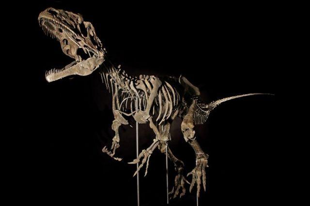 Σκελετός δεινόσαυρου πουλήθηκε έναντι 2,3 εκ. ευρώ σε δημοπρασία   tovima.gr