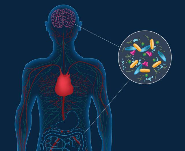 «Εμβόλιο» από καλά βακτήρια εναντίον στρες | tovima.gr