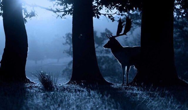 Πολλά ζώα γίνονται νυχτόβια για να αποφύγουν τον άνθρωπο | tovima.gr