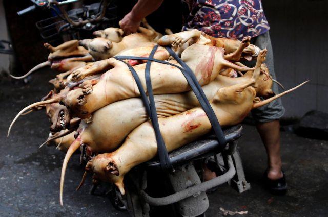 Ν. Κορέα: Απαγόρευση της σφαγής σκύλων για το κρέας τους | tovima.gr