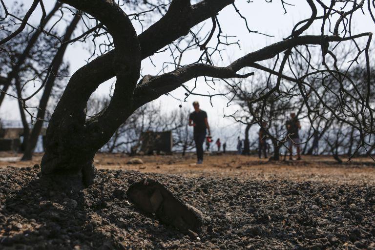 ΟΗΕ: Συλλυπητήρια στους συγγενείς των θυμάτων της πολύνεκρης πυρκαγιάς | tovima.gr