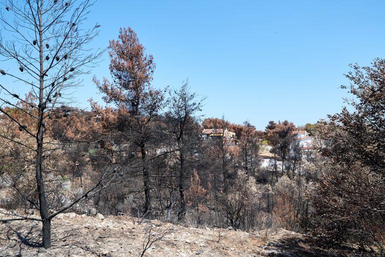 Καθυστερημένα έφτασε η πυροσβεστική στο Νταού Πεντέλης   tovima.gr