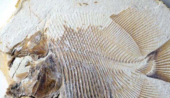 Παλαιοντολόγοι ανακάλυψαν τον αρχαιότερο πιράνχα | tovima.gr