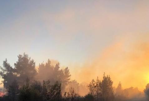 Φωτιά Χαλκιδική : Εκτείνεται σε 3 χλμ. – Προληπτική εκκένωση του οικισμού Σάρτη | tovima.gr