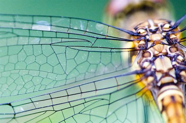 Πώς τα έντομα δημιουργούν τα μοτίβα των φτερών τους | tovima.gr
