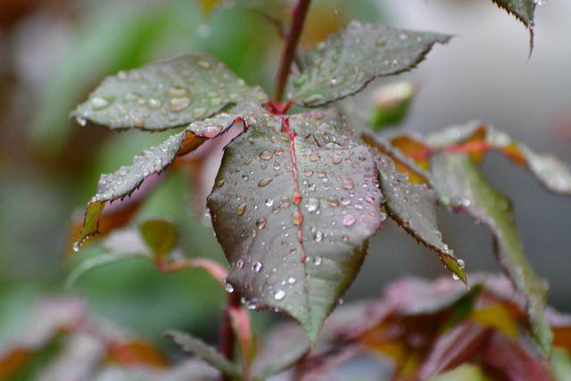 Αγριεύει ο καιρός – Ερχονται βροχές και ισχυροί βοριάδες | tovima.gr