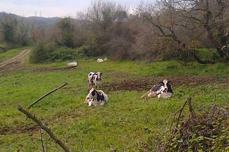Σε «καραντίνα» μολυσμένη μονάδα βοοειδών στην Πρέβεζα | tovima.gr