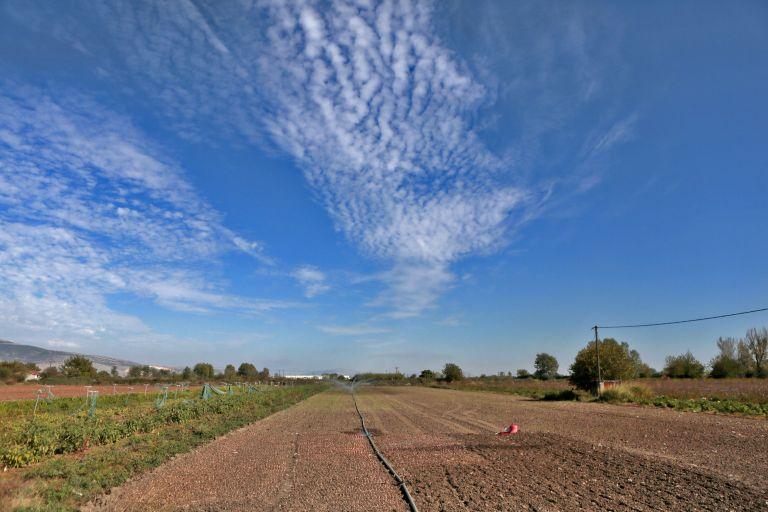 200.000 στρέµµατα αγροτικής γης θα παραχωρηθούν σε ανέργους | tovima.gr