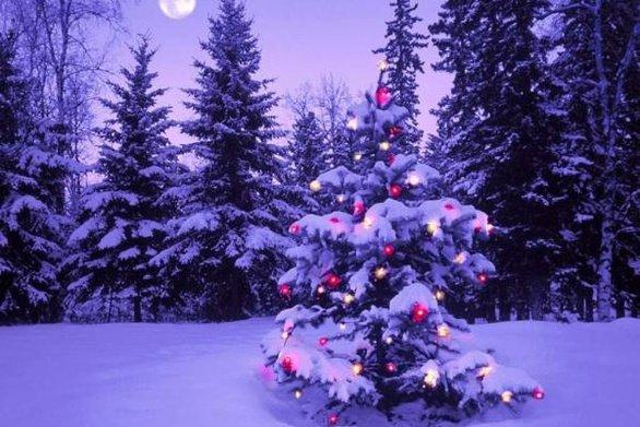 25 Δεκεμβρίου : Γιατί γιορτάζουμε τα Χριστούγεννα τη συγκεκριμμένη μέρα; | tovima.gr