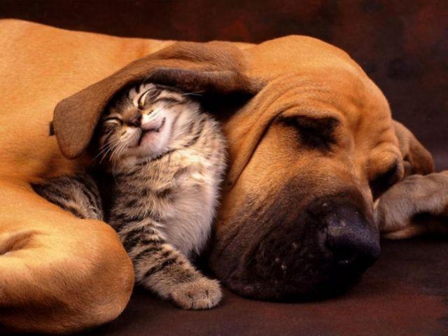 Βρετανία: Απαγορεύει την πώληση σκύλων και γάτων στα pet shops | tovima.gr