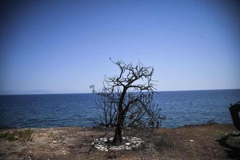 Eλληνική ιθαγένεια στους μετανάστες ψαράδες για την ηρωική τους πράξη στο Μάτι | tovima.gr